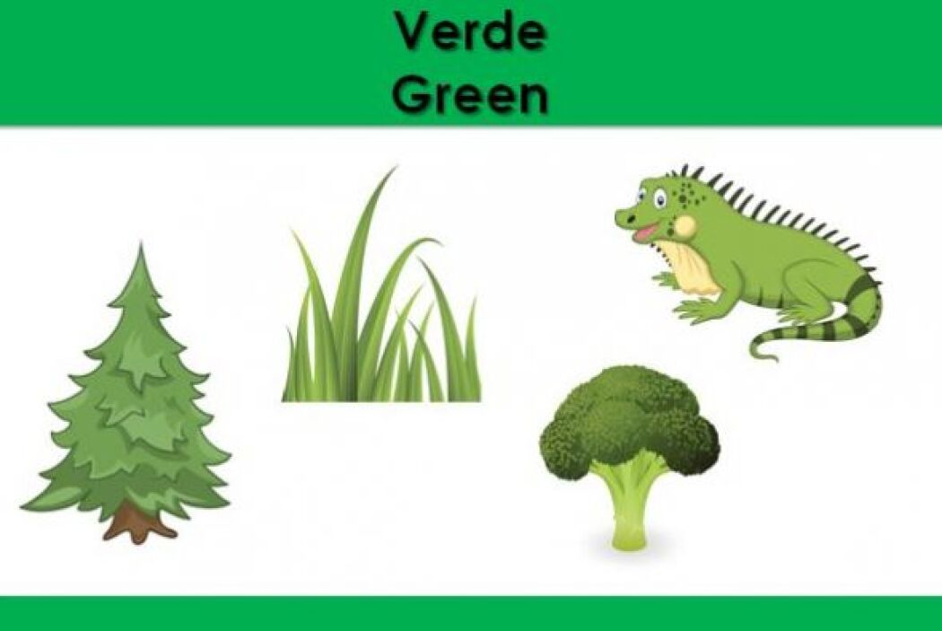 El color verde. ¿Qué otras cosas son verdes?