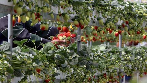 ¿Cuáles son las peticiones de los trabajadores agrícolas al gobierno?