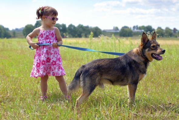 Recuerda que el ejercicio para tu mascota significa diversión, quítate l...
