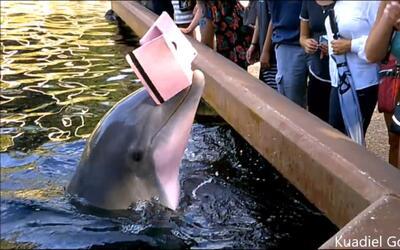 Momento en que un delfín le arrebató el iPad a una visitan...