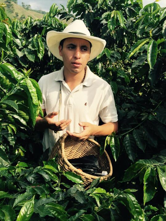 Siembra y proceso del café en finca de Colombia