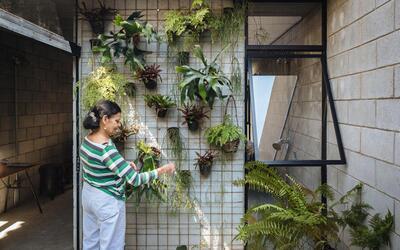 ¡Sé verde y cuida las plantas de tu casa! empleada.jpg