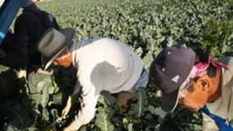 El desempleo entre hispanos bajó al 12 por ciento en agosto aff948e2ed48...