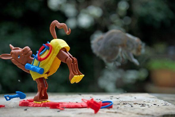 Max utilizó juguetes y comida para estimular a las ardillas para adoptar...