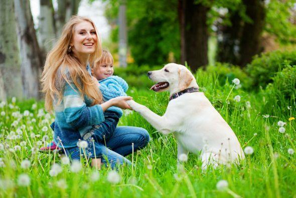 La mayoría de los perros pueden desarrollar la capacidad de seguir el ri...