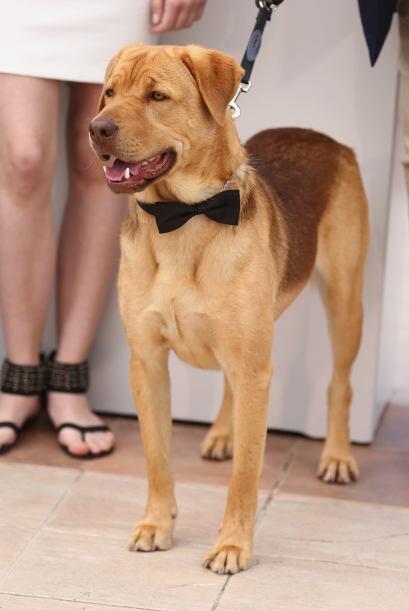 En la historia Hagen es el perro al que Lili una adolescente de 13 a&nti...