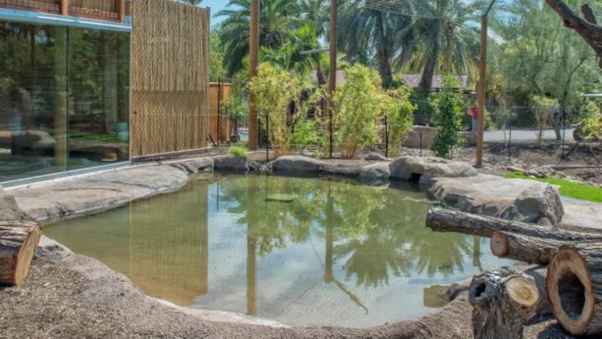 Tigres de Sumatra estrenan hogar en el Phoenix Zoo FohhiGrV1hRE1jsR-2TRx...