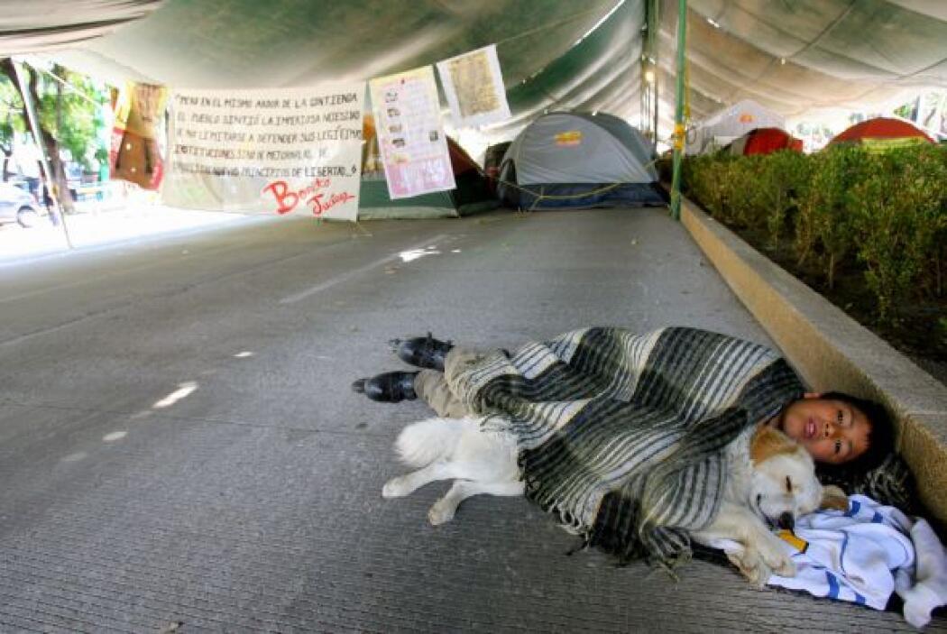 El entorno urbano que se vive con los animales callejeros ha generado un...