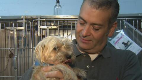Servicio de animales de Miami-Dade no cobrará por la adopción de mascota...