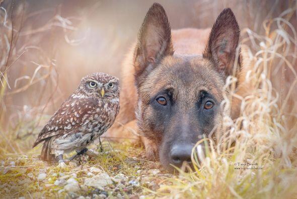 No podrías creerlo pero estos dos animalitos se la pasan juntos.