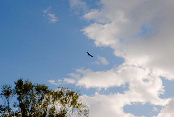 Luego, utilizando plumas de águila limpian el alma humana antes de la úl...