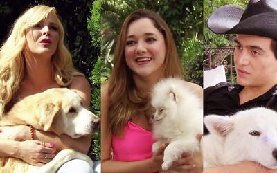 Marjorie, Sherlyn y Julián no se separan de sus amadas mascotas