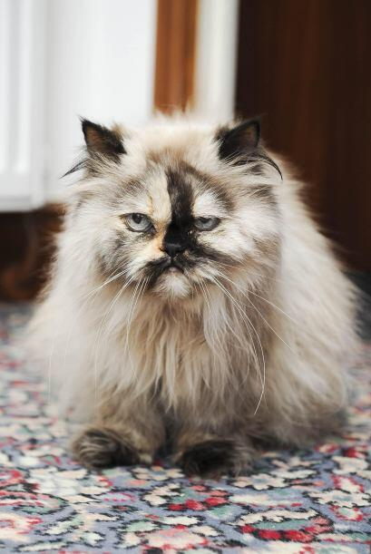 Esperamos que esta gata comprenda el amor que siente su dueña por ella,...