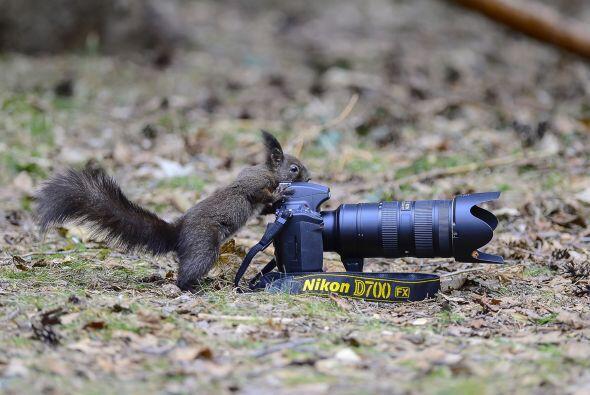 También podemos ver a las ardillas muy entretenidas usando la cámara de...