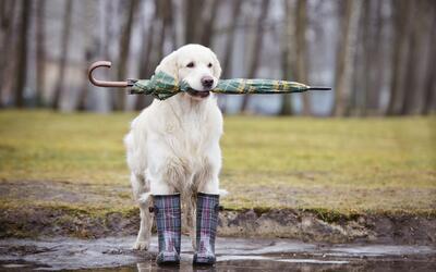 Mantén seguras a tus mascotas en el mal clima