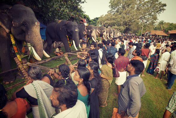 En el fascinante festival hubo alrededor de 10 mil personas que formaron...