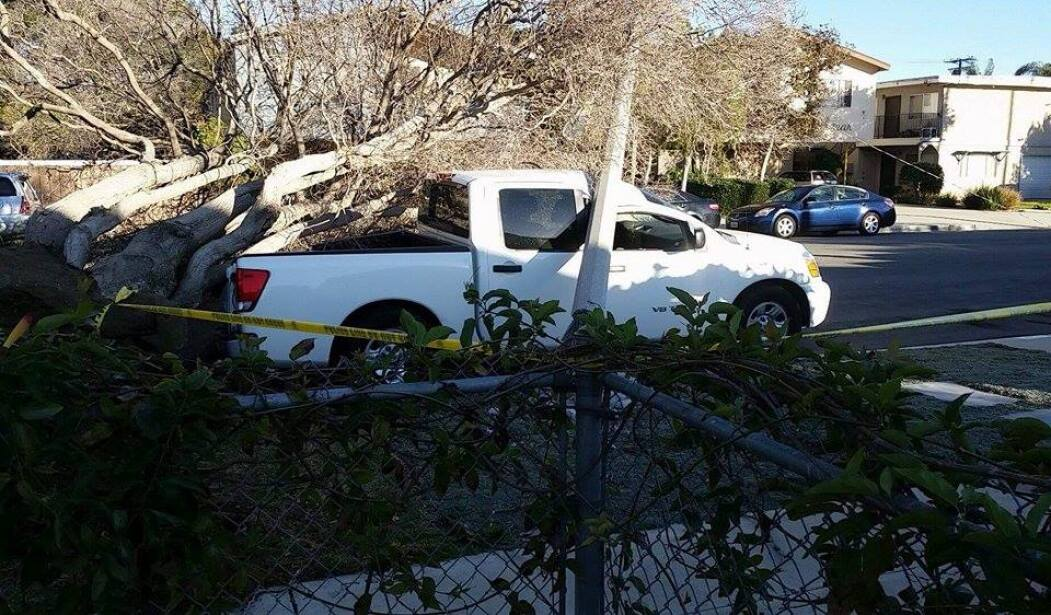 Árbol caído sobre una camioneta en Oxnard, CA