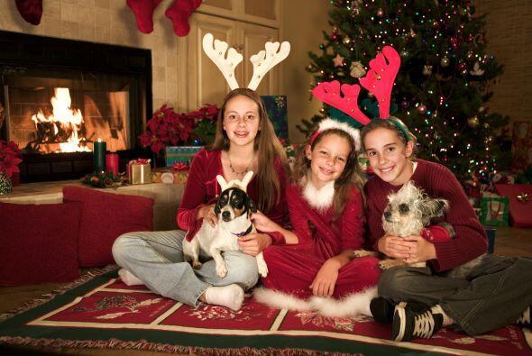 Los adornos navideños también son un peligro para tu mascota traviesa, p...