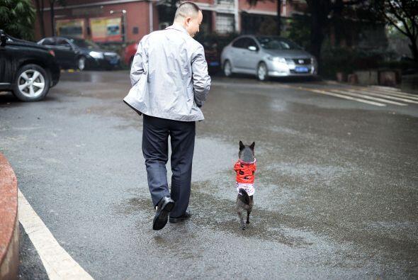 Lo más curioso es que este curioso perrito camina erguido al lado...