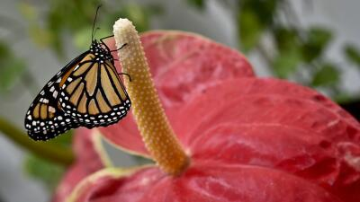 Jewell & Pacchiano: México y EEUU, socios en conservación y protección d...
