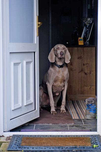 Resulta que este canino tiene una rara alergia a algo que se encuentra e...