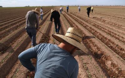 Trabajadores migrantes en los campos de California.