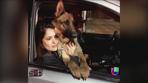 Salma Hayek está de luto por la muerte de su perrito Mozart