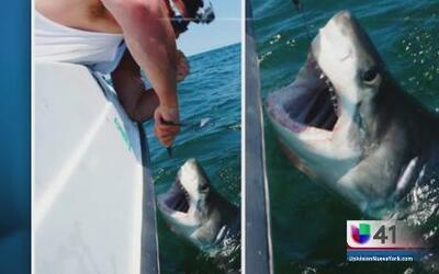 Aparece otro tiburón blanco en nuestra área