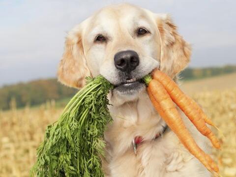 Cuidas tu alimentación para estar sana y sentirte bien; ¡no olvides la d...
