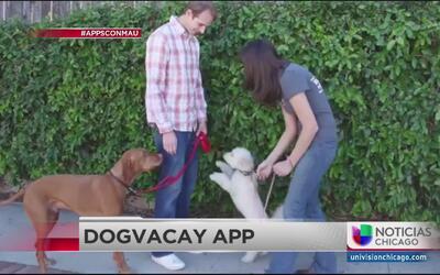 App para que te cuiden a tu mascota cuando sales de viaje