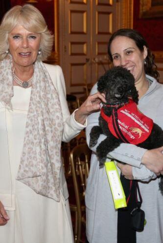 Los perros y sus dueños visitaron el palacio para la demostración con la...