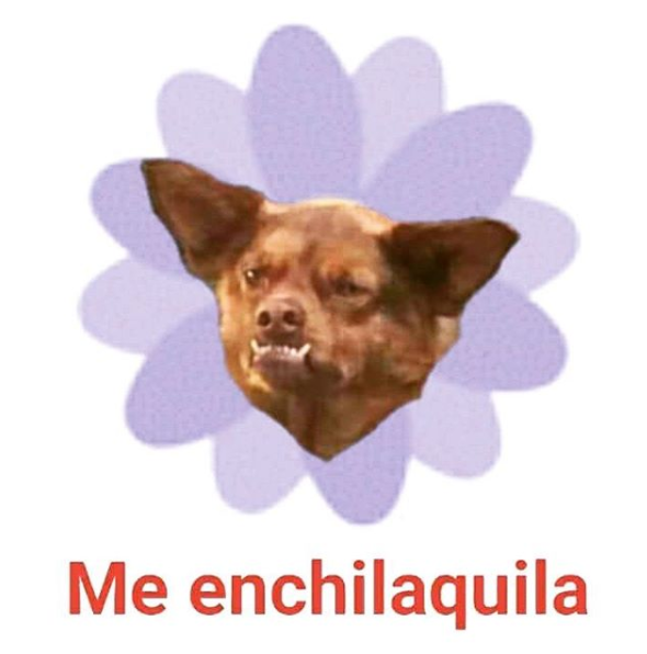 Resultado de imagen para historia chilaquil perro