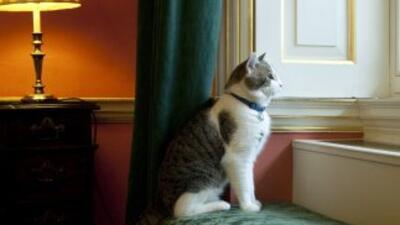 Larry, el gato guardaespaldas exterminador