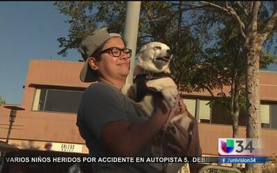 Amantes de los perros se reúnen para celebrar a sus mascotas