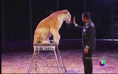Prohíben animales en los circos de México