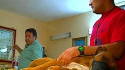 Veterinario voluntario de alas de angel