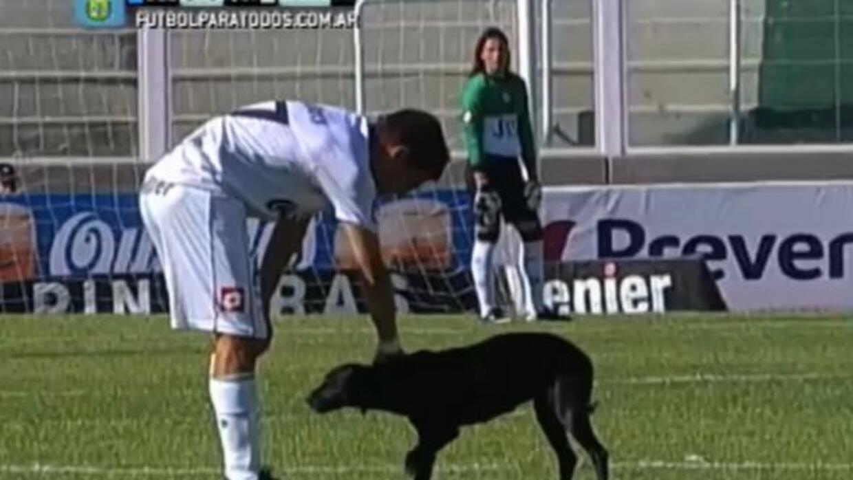 Un jugador aprovechó para darle un masaje al perro.