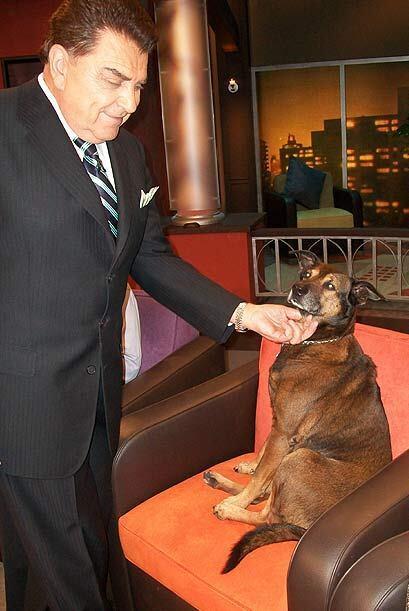 El Don es un amigo de los 'canes'  y no perdió la oportunidad de...