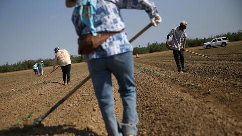 Trabajadores agrícolas en California