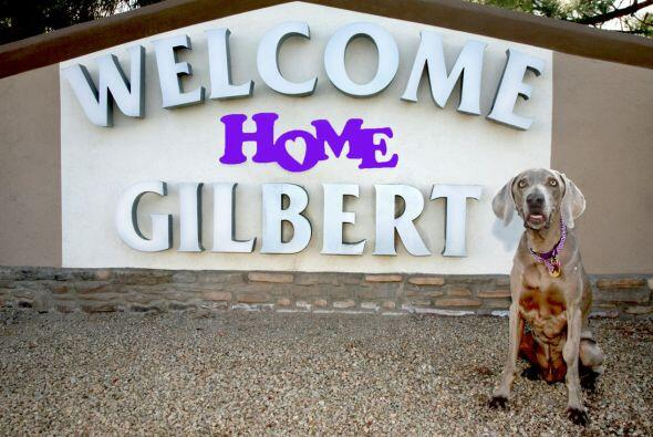 Hace un año llegó para quedarse en su nuevo hogar, ahora Gilbert es una...