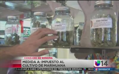 Impuesto a cultivos de marihuana en Sonoma
