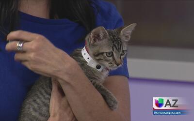Adopta un gato, salva una vida