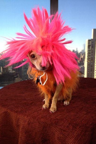 Si P!nk viera a Honey estaría orgullosa de su cabello y su look desenfad...
