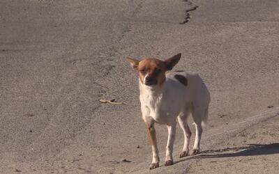 Vecinos de Modesto denuncian presencia de perros callejeros