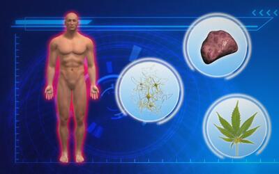 Los efectos de la marihuana para la salud: científicos explican los bene...