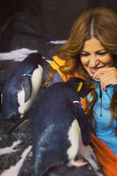 ¿Qué tanto le estará platicando a los traviesos pingüinos?