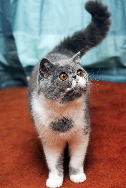 Antes de conocer la fama, el felino vivía con sus dueños Caroline y Lynd...
