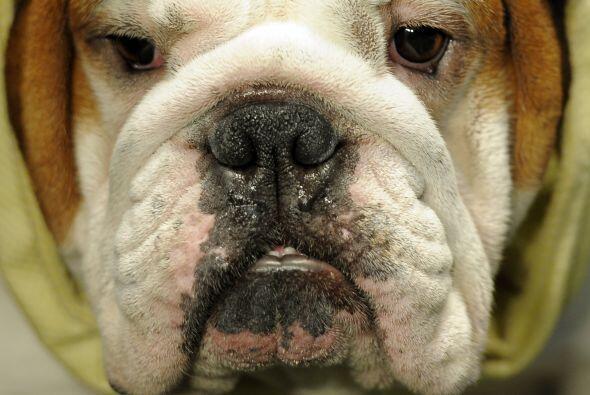 Los perros, como las personas, también necesitan ser estimulados física...