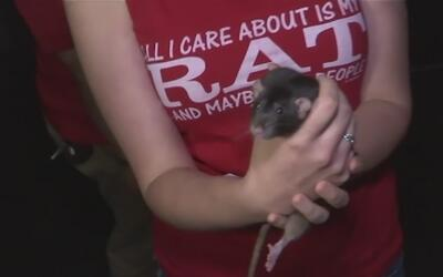 Un recorrido al interior del 'Rat Café' en San Francisco