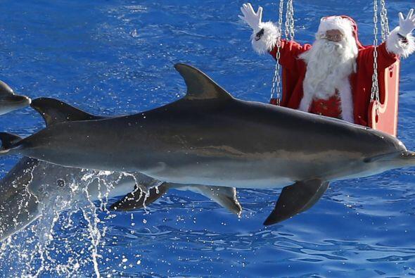 19. Ni hablar de acrobacias con delfines, si se trata de robarte una son...